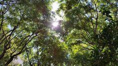 Licht und Liebe  Reiki auf Mallorca  www.samaki-mallorca.com  #reikimallorca #samaki #samakishop #engelrufer #hypnosemallorca #reiki
