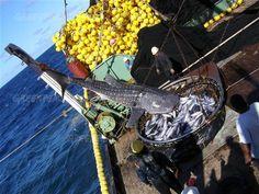 greenpeace fishing