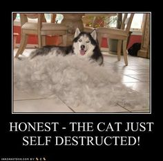 Google Image Result for http://ihasahotdog.files.wordpress.com/2009/09/funny-dog-pictures-self-destructed.jpg