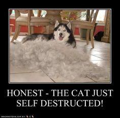 Google Image Result for http://ihasahotdog.files.wordpress.com/2009/09/funny-dog-pictures-self-destructed.jpg