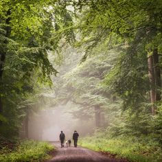 A walk in the forest (Germany) by Heiko Gerlicher (@heikogerlicher) on Instagram