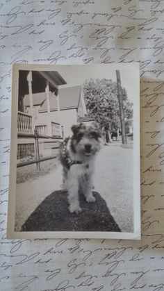 Vintage Dog photo Wirehaired Fox Terrier by PUGHALLVINTAGE on Etsy