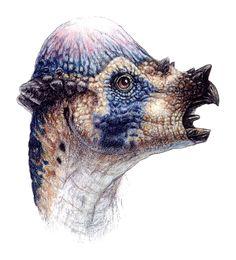 The Lost World Jurassic Park Pachycephalosaurus head drawing