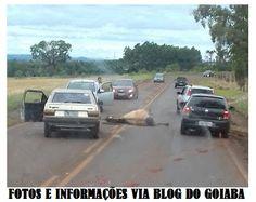 BLOG DE NOTÍCIAS DE MANOEL RIBAS E REGIÃO: Cavalo na pista provoca acidente na saída de Ivaip...