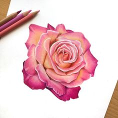 Fine colored rose sketching with pink petal, How to draw using pencil color. Cool Rose Drawings, Rose Petals Drawing, Pencil Drawings Of Flowers, Flower Sketches, Colorful Drawings, Pencil Flower Art, Rose Drawing Pencil, Pink Drawing, Color Pencil Art