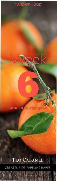 ✮ Ingredient of the Week 6 : Mandarin, Sicily #teocabanel #ingredient #perfumery #mandarin #sicily - Teo Cabanel