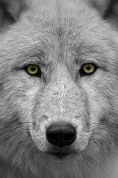 I may look at the world differently than you with my strong sense of sight, hearing, or smell. I may look different with my real fur coat. I also may have a different lifestyle because I can run free. Yet even with all my special abilities you look at me as a monster even though somewhere deep inside I am just like you.   Wolves aren't monsters they are beautiful creatures trying to fit in with the world like you and me.