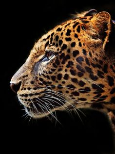 jaguar -- I'd put this to guard my house -- if I could do that .. after training him obedience. :)
