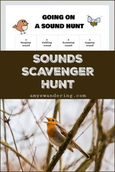 Learn about sound with these ideas for a sound unit study, including a FREE printable Going on a Sounds Hunt Scavenger Hunt. Summer Scavenger Hunts, Nature Scavenger Hunts, Scavenger Hunt For Kids, Sound Science, Science For Kids, Summer Science, Nature Activities, Science Nature, Montessori Activities