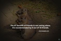 The #1 benefit of friends is not eating alone. It's recommended by 9 out of 10 friends.  #friendshipquotes