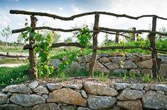 rustic grape trellis