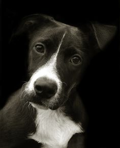 "The beautiful black and white portraits taken by photographer Traer Scott, depict the emotions and personalities of the shelter dogs she has spent time with while volunteering. The portraits have been compiled in a book entitled ""Shelter Dogs,"" with a percentage of proceeds donated to the ASPCA."