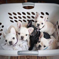 Basket full of babies