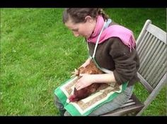 How to Kill a Chicken (Video)- Part 1 of 2