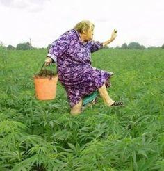 Grandma always loved her harvest day.