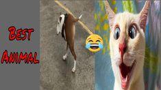 #bestanimal #funny 🤣 Funniest Animals Vines 2020- Try Not To Laugh - Bes... Funny Shit, The Funny, Funniest Animals, Funny Animals, Funny Animal Vines, Try Not To Laugh, Funny Fails, Funny Animal Videos, Challenges