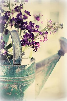 Just plain C O U N T R Y CHARM... Blue patina watering can and purple flowers.