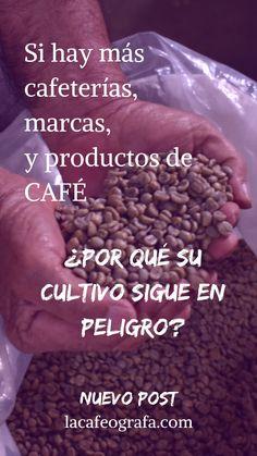 #coffeeblog #café #caficultura Almond, Beans, Vegetables, Food, Coffee Store, Growing Up, Essen, Almond Joy, Vegetable Recipes