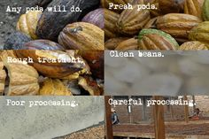 Genetics & Processing.  To make fine flavour chocolate, the processing of cacao is vastly different to the processes undergone when making low quality chocolate.   Encouraging farmers to grow the right kind of cacao under the conditions preferable for fine flavour, takes financial incentive...  www.choctree.co.uk