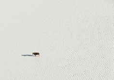 zack seckler  |  aerial abstracts #4