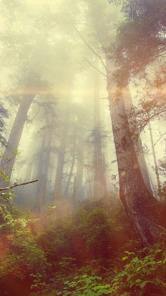 papers.co-mn33-forest-wood-fog-flare-red-nature-green-33-iphone6-wallpaper.jpg 750×1.334 píxeles
