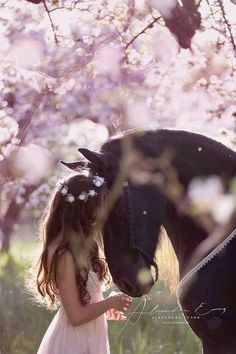 Horse snuggling nuzzling face to face with little girl that has flowers in her hair and a pink dress. Lovely pink flowering trees in the background make the dark horse even more beautiful. Gorgeous equine photography.