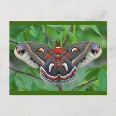 Types Of Moths, Moth Drawing, Cecropia Moth, Fairy Cosplay, Moon Moth, Summer Art Projects, Cool Bugs, Crochet Unicorn, Draw On Photos