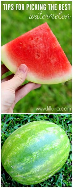 Tips and Tricks for Picking out the Sweetest Watermelon! { lilluna.com }