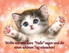 Good morning funny pictures free for whatsapp - Good morning funny pictures free for whatsapp Informations About Guten Morgen Lustige Bilder kostenl - Good Morning Funny Pictures, Funny Cat Pictures, Cool Pictures, Beautiful Pictures, Good Day Wishes, Life Lesson Quotes, Morning Humor, Funny Morning, Morning Wish