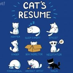 Cat Resume T-Shirt « Daily T-Shirts