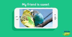 Registratevi al sito, scattate una foto ai vostri amici speciali e caricatela per partecipare a My friend is sweet! http://www.misurastevia.it/page/my-friend-is-sweet  #animals #friends #stevia #misurastevia