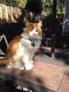 Enjoying the day Orange Cats, Cat Eyes, Funny Cats, Kitty, Cute, Cutest Animals, I Love Cats, Oaxaca, Red Heads