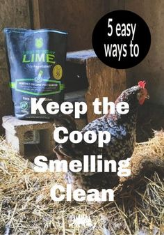 Keep Your Chicken Coop Smelling Fresh-Timber Creek Farm - - If you have to hold your nose to enter the chicken coop, you need to read these five tips to Keep your chicken coop smelling fresh. Backyard Chicken Coop Plans, Raising Backyard Chickens, Chicken Garden, Keeping Chickens, Backyard Farming, Farm Chicken, Chicken Pen, Chicken Lady, Fresh Chicken