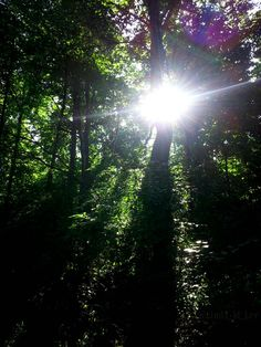 Love is like the sun: has its inner energy source that shines on you. ~Helene Lagerberg  #quote #photo #outdoors #photography #nature #forest #woods #hiking #art #design #landscape #sun #happiness