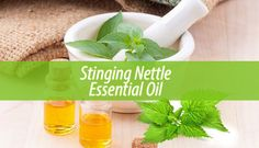 While you may curse this plant for causing you discomfort, stinging nettle essential oil has lots of benefits. For example, it is a relief for allergies.
