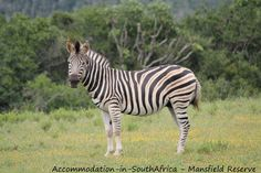 Game at Mansfield Reserve. Game Reserve, Sunshine Coast, All Pictures, Boat, River, Animals, Dinghy, Animales, Animaux
