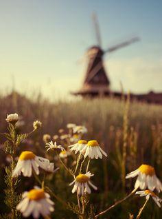 Holland , home sweet home