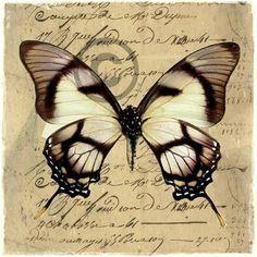 To sommerfugl-bilder, digital art. Vintage Labels, Vintage Ephemera, Vintage Paper, Vintage Butterfly, Butterfly Cards, Stencil, Art Doodle, Foto Transfer, Picture Hangers