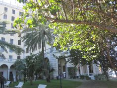 Hotel Nacional Plants, Hearts, Flora, Plant