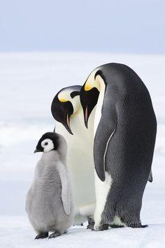 Proud penguin parents.