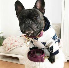Super cute dog hoodie