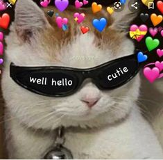 Cute Baby Cats, Cute Funny Animals, Funny Cats, Meme Chat, Cat Memes, Funny Memes, Funny Videos, Wholesome Pictures, Cute Love Memes
