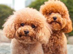 15 Hypoallergenic Dogs and Cats - Health