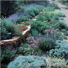 Recreate a bit of the romance of the Mediterranean in your yard. Using a selection of plants from the Mediterranean region of Europe and western Asia. The perennials in this garden provide a tapestry of flowers in blue, pink and red along side fascinating foliage in shades of gray, silver, green and blue.    http://www.highcountrygardens.com/index/page/product/product_id/169/category_id/894/product_name/Cold+Hardy+Mediterranean+Garden