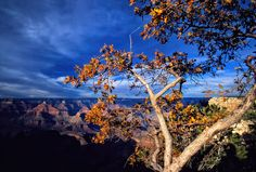 Grand Canyon Fall Tree by Eamon  Gallagher on 500px