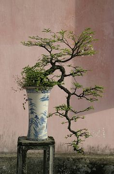 Ancient Bonsai in Buddhist Pagoda