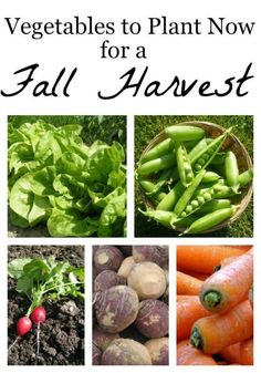 Vegetables to Plant Now for a Fall Harvest | eBay