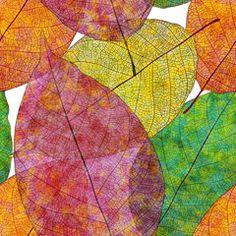 [フリーイラスト素材] イラスト, 植物, 葉っぱ, EPS ID:201411081100