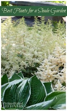 Best Plants for a Shade Garden - Do you have a shady spot in your yard, try growing one of these plants that thrive with little direct sunlight.