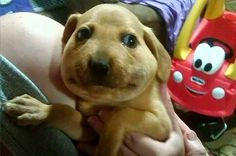 dogs, photos, cute, regret, swollen faces, curosity, trouble, funny, foolish, cute dogs, stung by bees